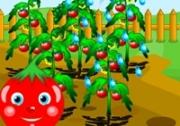 เกมส์รดน้ำต้นมะเขือเทศ