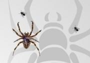 เกมส์แมงมุมกินแมลง